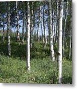 Quiet Forest Metal Print