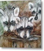 Raccoon Babies By Christine Lites Metal Print by Allen Sheffield