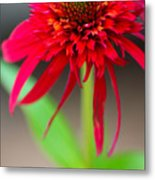 Radient Red Metal Print