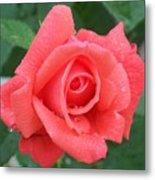 Rain Drenched Rose Metal Print