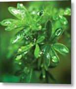Rain Drops On Green Leaves Metal Print