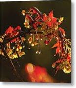 Rain Soaked Leaves-1 Metal Print