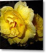 Rain Soaked Yellow Rose Metal Print
