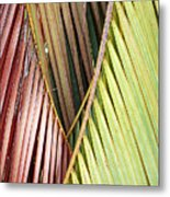 Rainbow Of Palms Gp Metal Print