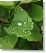 Raindrops On Ginko And Warm Woolen Mittens Metal Print