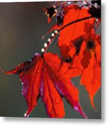 Raindrops On Red Leaves Metal Print