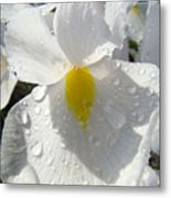 Raindrops On White Irises Flowers Sunlit Baslee Troutman Metal Print