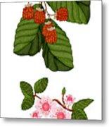Raspberries And Raspberry Blossoms Metal Print