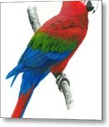 Red And Green Macaw Metal Print