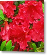 Red Azaleas Metal Print