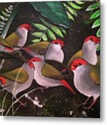 Red-browed Finch Flock Weipa Metal Print