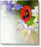 Red Corn Poppy Metal Print