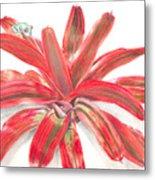 Red-eyed Tree Frog On Bromeliad Metal Print