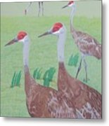 Red Heads Metal Print