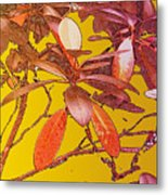 Red Leaves Gold Sunset Metal Print
