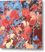 Red Maples Metal Print by - Harlan