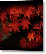 Red  Momiji Metal Print
