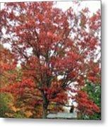 Red Oak 2 Metal Print