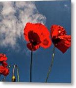 Red Poppies On Blue Sky Metal Print