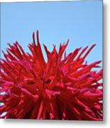 Red Purple Dahlia Flower Art Print Giclee Baslee Troutman Metal Print