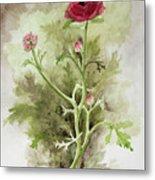 Red Ranunculus Metal Print