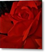 Red Red Rose  Metal Print by Daniele Smith