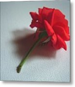 Red Rose Plucked Metal Print