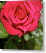Red Rose With Droplet Metal Print