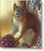 Red Squirrel With Pine Cone Metal Print