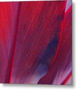 Red Ti Leaves At Last Light Metal Print