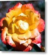 Red Tipped Yellow Rose Metal Print