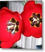 Red Tulip Duo Metal Print