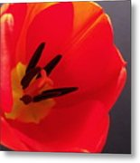 Red Tulip IIi Metal Print