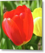 Red Tulip  Metal Print by Richard Mitchell