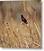 Red Winged Blackbird Metal Print by Ernie Echols