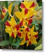 Red Yellow Orchids Metal Print
