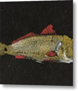 Redfish Metal Print by Captain Warren Sellers