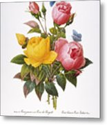 Redoute: Roses, 1833 Metal Print by Granger