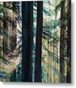 Redwood Light Metal Print