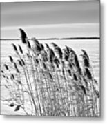 Reeds On A Frozen Lake Metal Print
