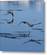 Reflecting Geese Metal Print
