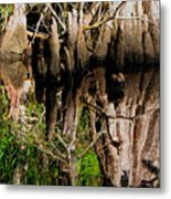 Reflection Of Cypress Knees Metal Print