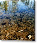 Reflections Of Nature Metal Print