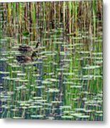 Reflections On Duck Pond Metal Print