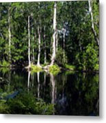 Reflections On The Ocklawaha River  Metal Print