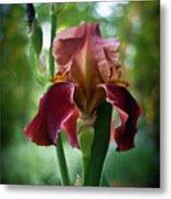 Regal Iris Metal Print