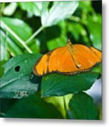 Resting--tropical Butterfly Metal Print