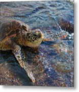 Resting Turtle Metal Print