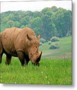 Rhino On The Hilltop Metal Print