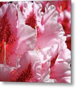 Rhodies Pink Fine Art Photography Rhododendrons Baslee Troutman Metal Print